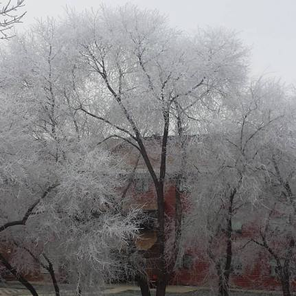 frostytree