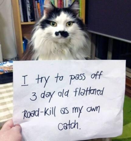 roadkillcat