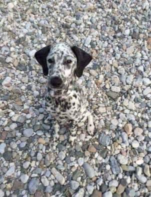 camouflagedog