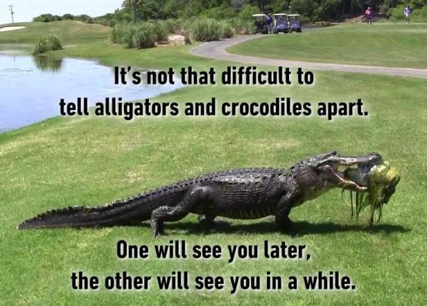 alligatorcrocodile