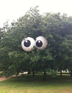 PLACE IN TREES. SCARE YOUR NEIGHBORS.