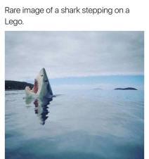 sharklego