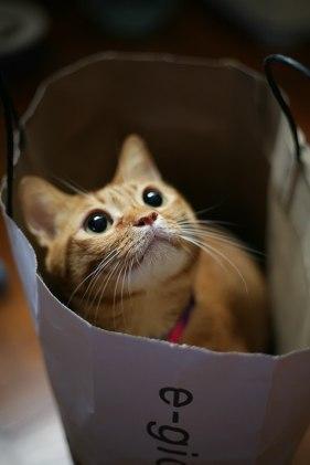_adorablecat