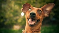 Funny-Compilation-Of-Excited-Dogs-Hilarious-Dog-Video